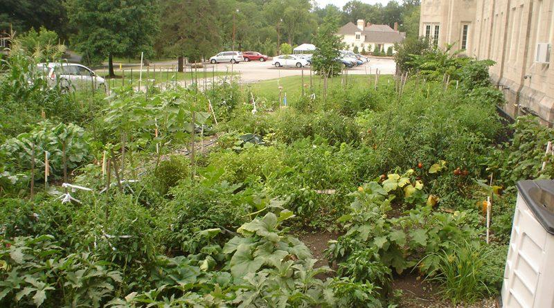 FBC Hunger Garden