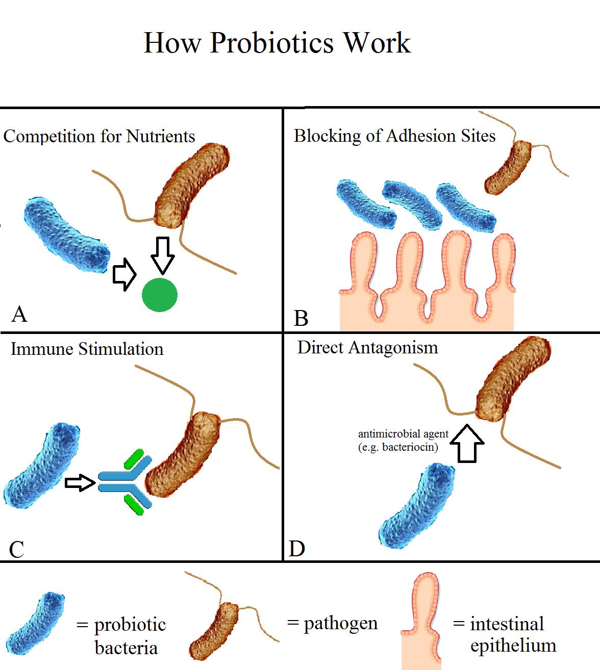 How Probiotics Work